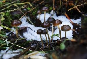 sma svampar